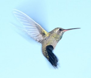 Google hummingbird update 300x259 - On-Page SEO Guide - How to Optimize your WordPress Blog