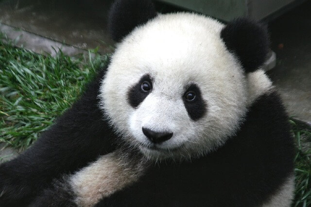 Google panda update 300x200 - On-Page SEO Guide - How to Optimize your WordPress Blog